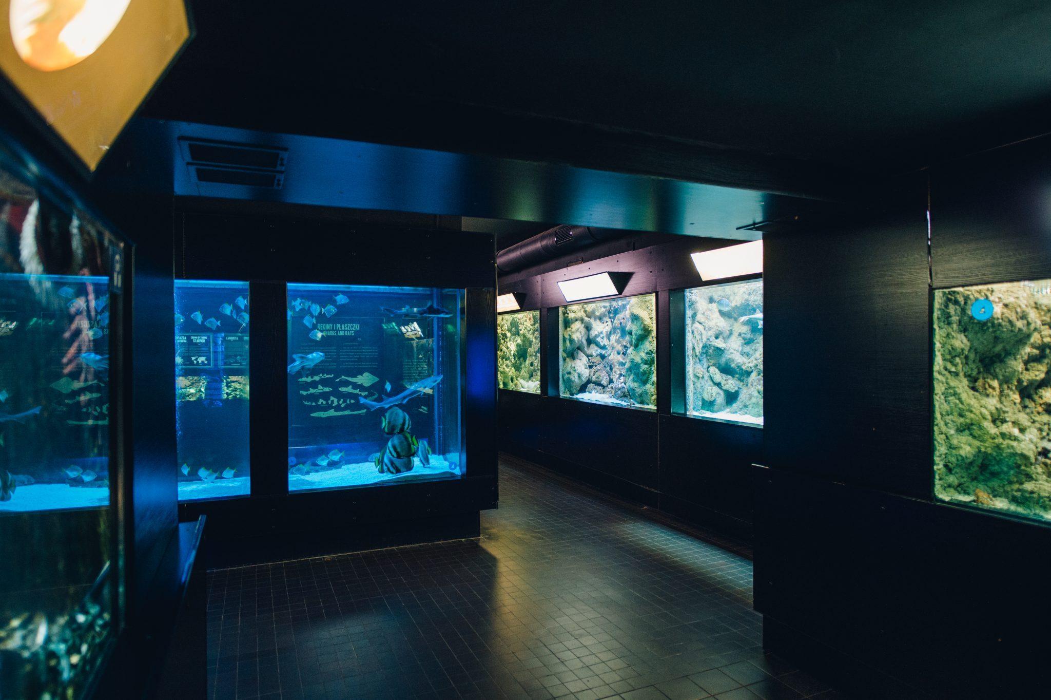 Aquatic Animals of the World