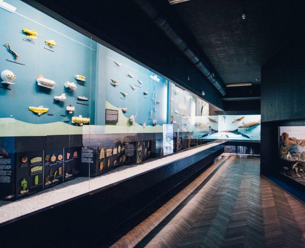 Sala Dydaktyczna