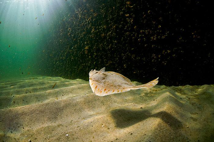 Basics of the marine ecology