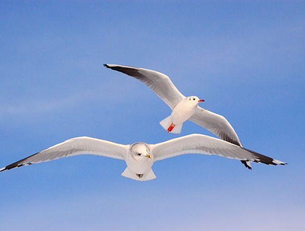 Ptaki przedszkolaki