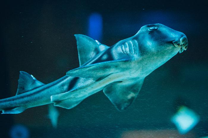 Animals of the Gdynia Aquarium