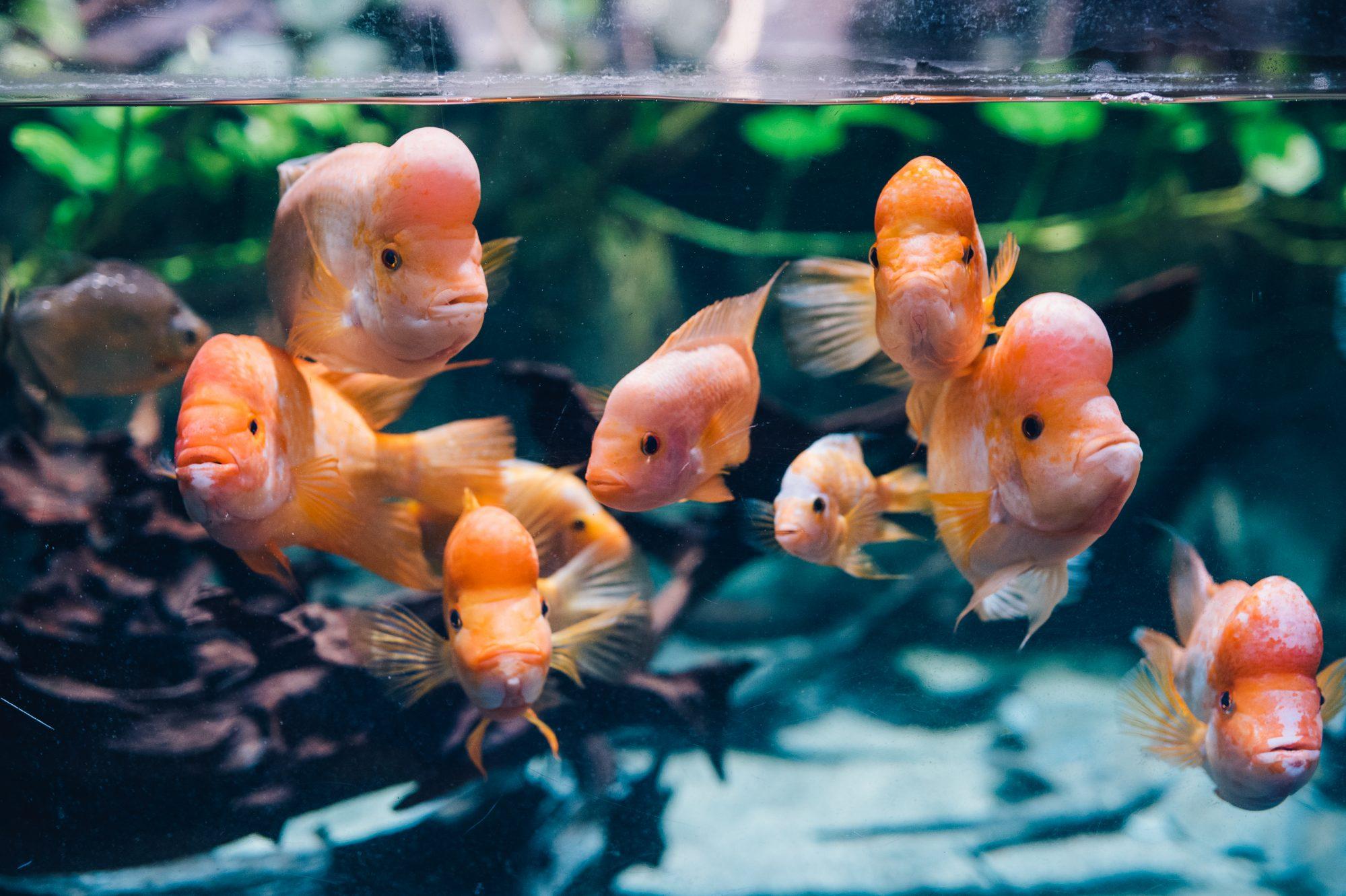 Nowa Strona Akwarium Gdyńskiego Akwarium Gdyńskie Mir Pib