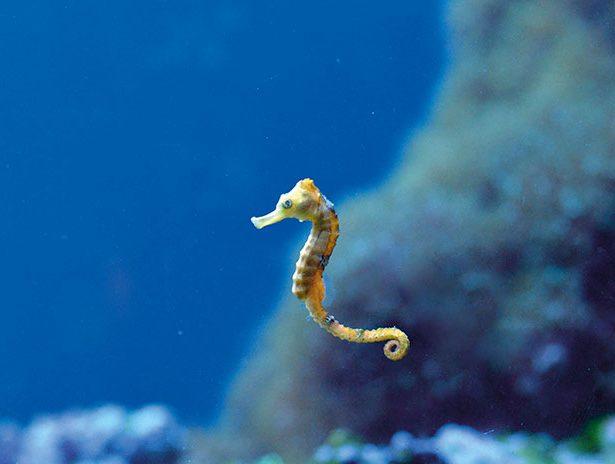 Barwne życie na rafie koralowej