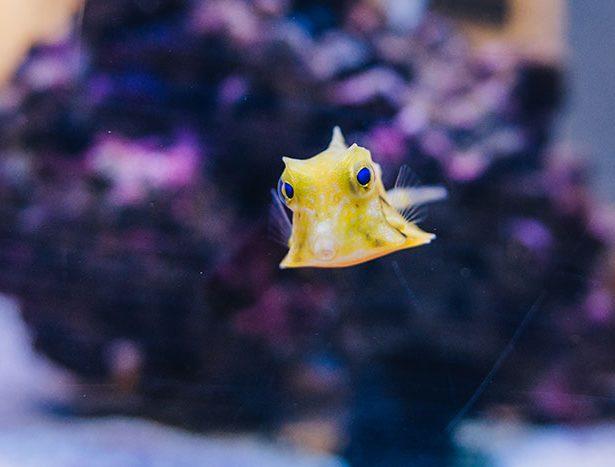 Niezwykłe zwierzęta morskie