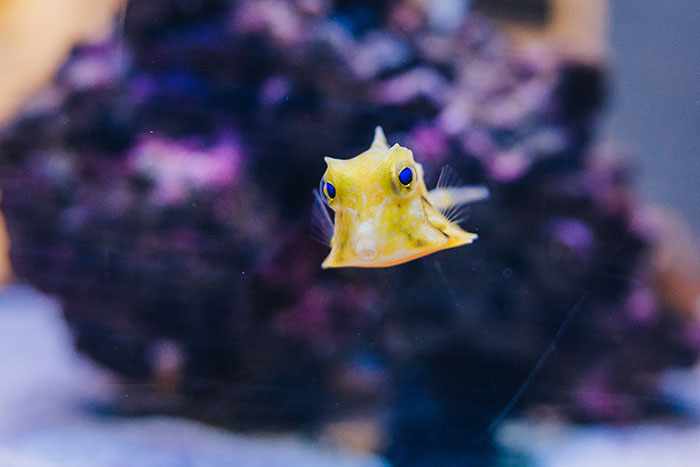 Amazing marine animals