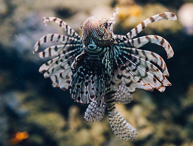 Groźne zwierzęta morskie