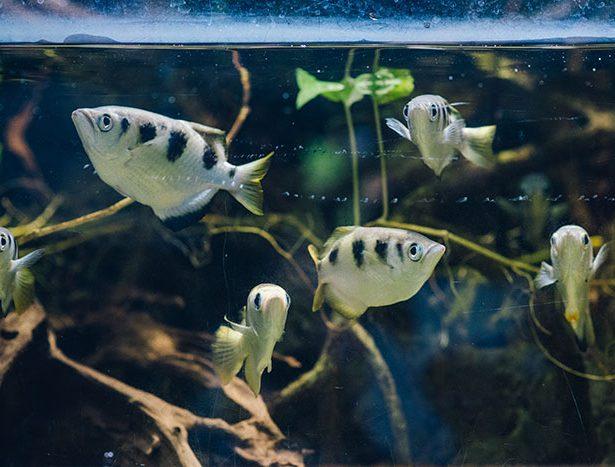 Rybia strzelanina w gdyńskim Akwarium