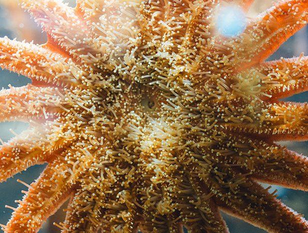 Szkarłupnie – niezwykłe zwierzęta morskie