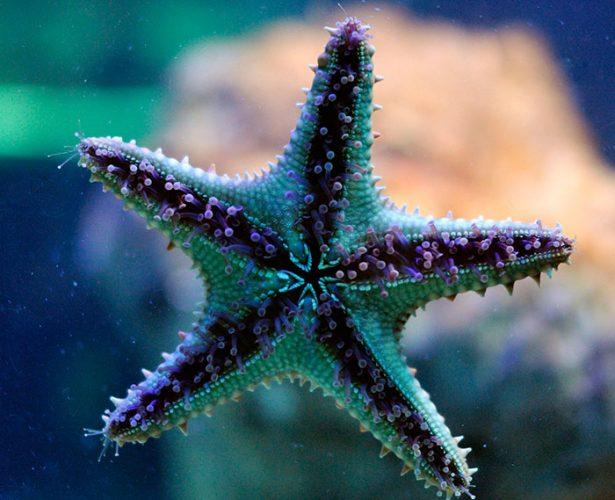 Bezkręgowce morskie