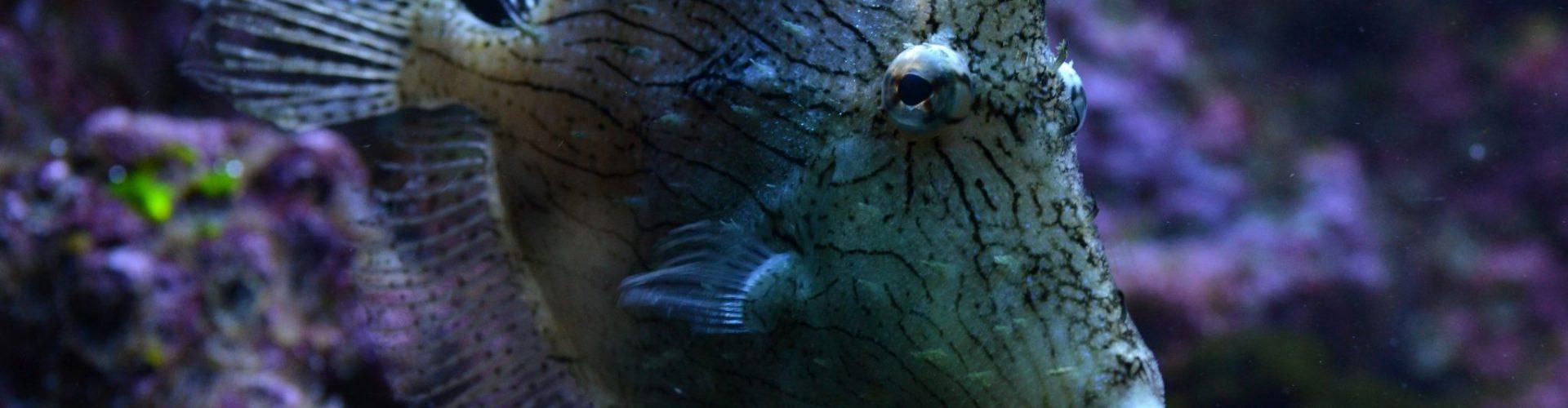 Jednorożek chwastniczek