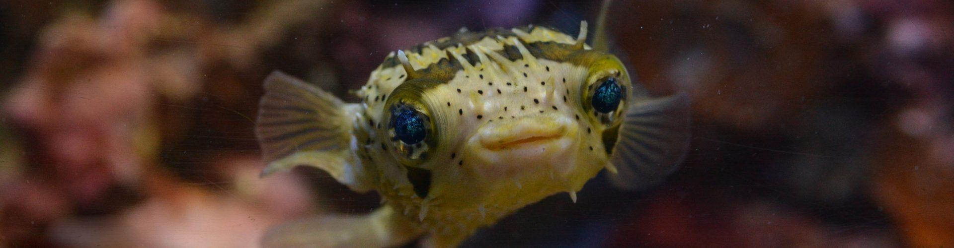 NMFRI Gdynia Aquarium