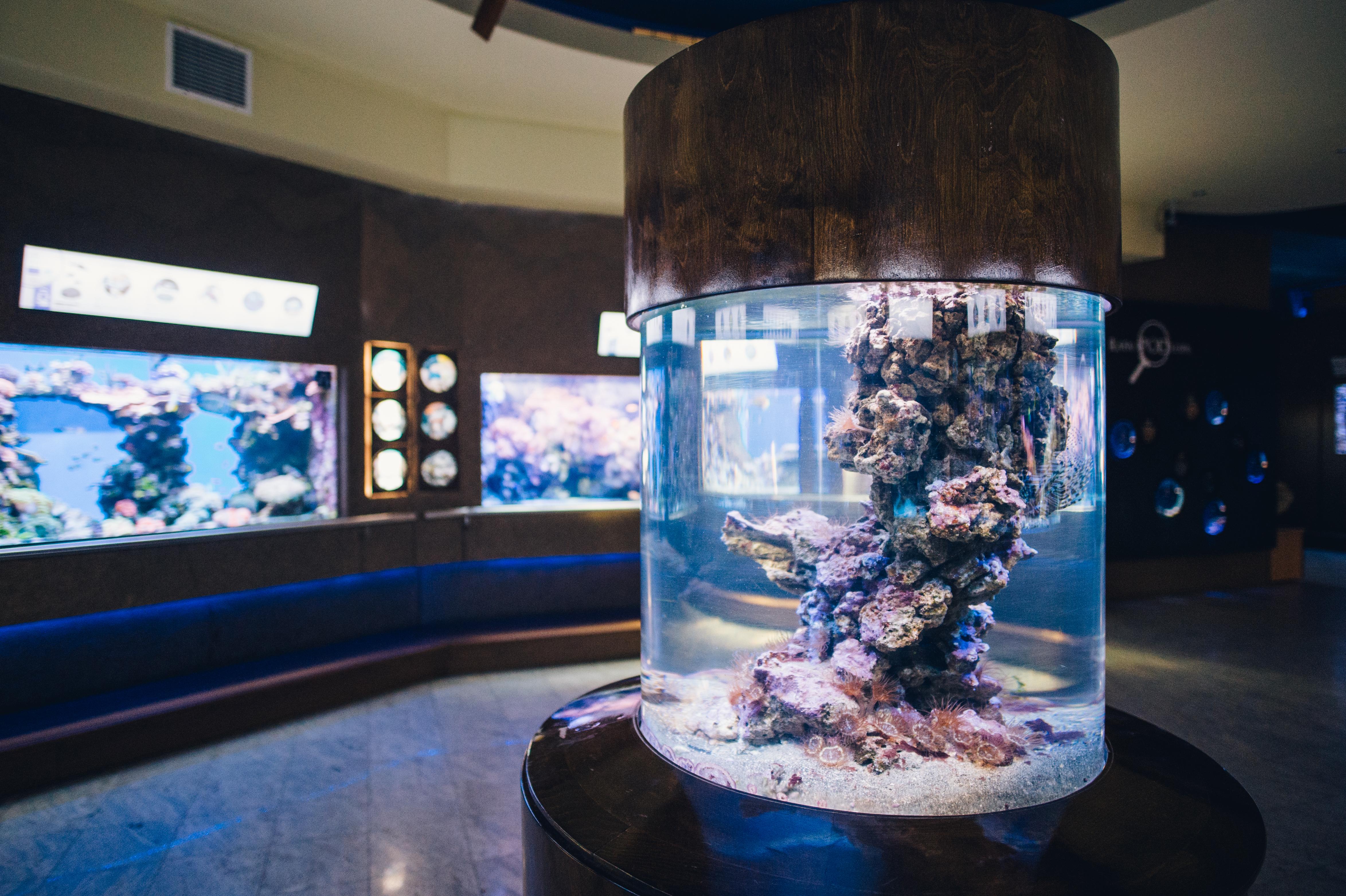 Holidays in the Gdynia Aquarium