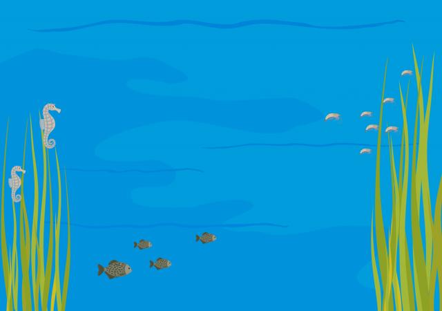 Dni Edukacji Morskiej   10-11.10