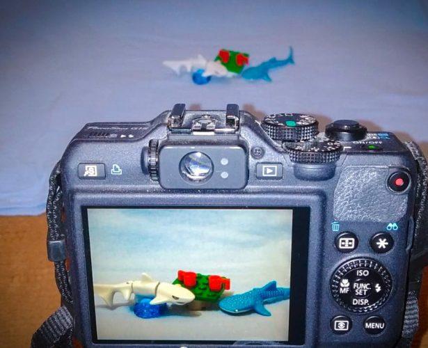 Wyniki konkursu fotograficznego: Dzień z życia rekina