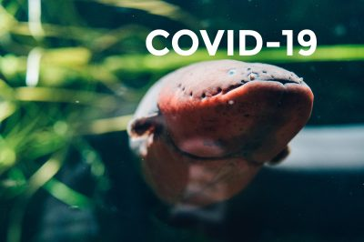 COVID-19 - rules of visit