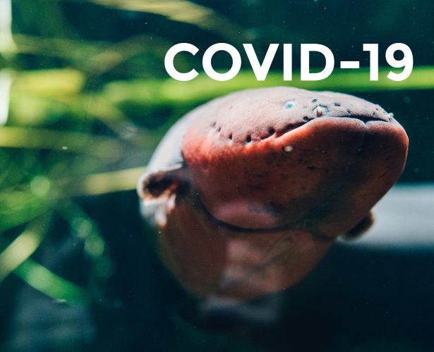 COVID-19 – rules of visit