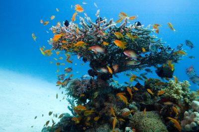 Usłysz Ocean online | 9.11 - 11.12
