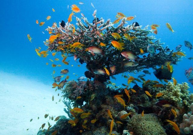 Usłysz Ocean online | 9.11 – 11.12