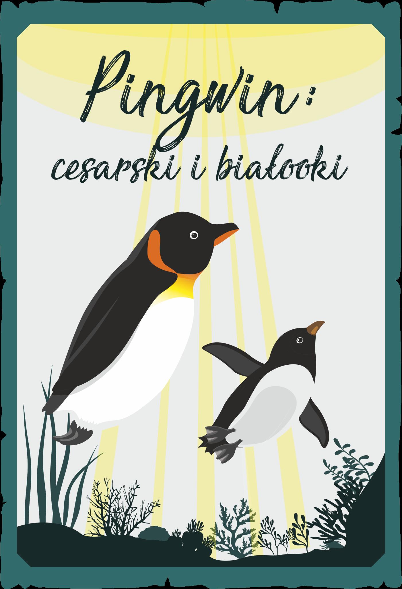 Pingwin cesarski i białooki
