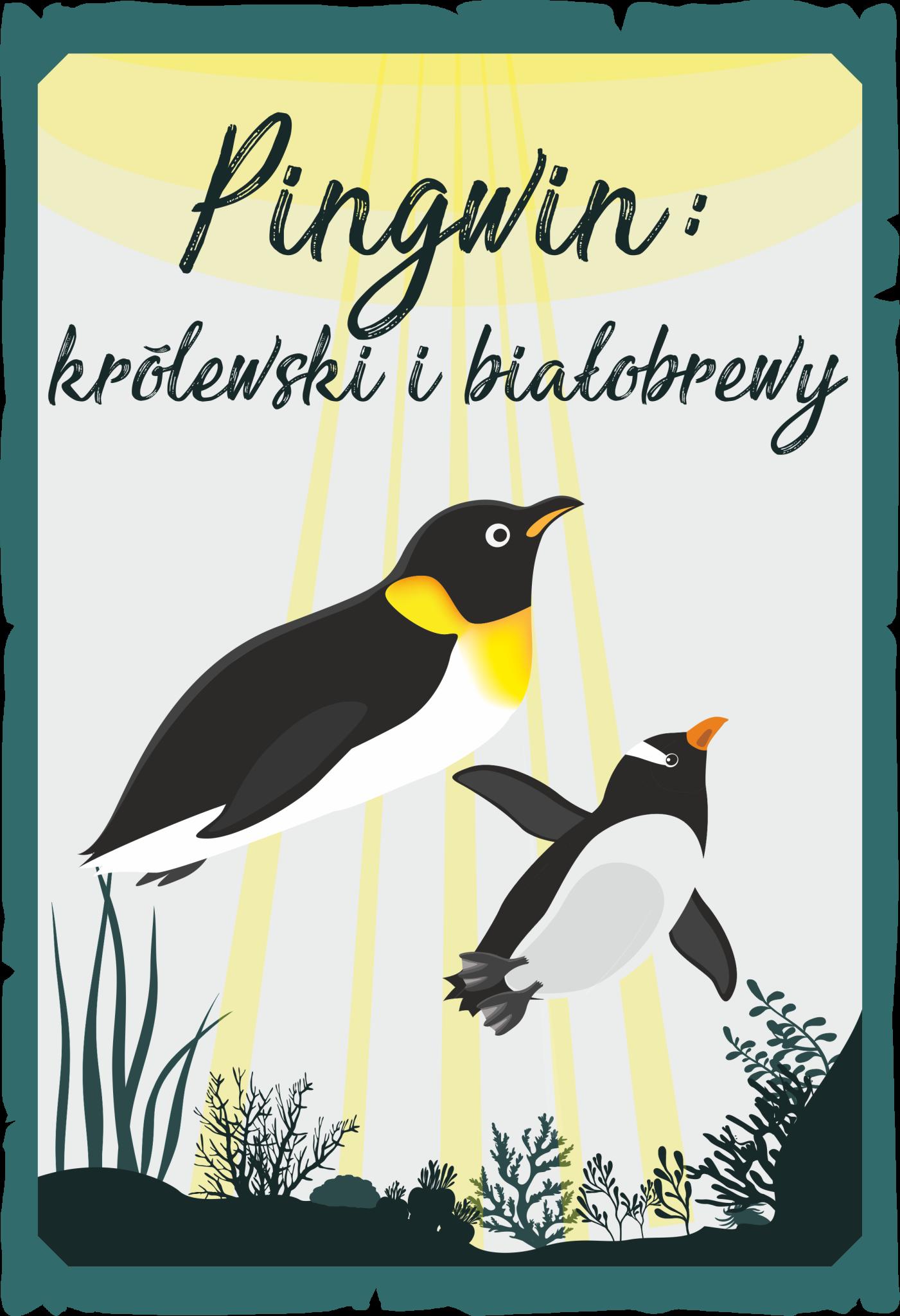 Pingwin królewski i białobrewy