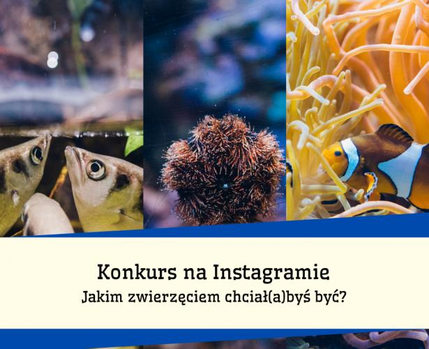 Ogłaszamy weekendowy Konkurs na Instagramie!