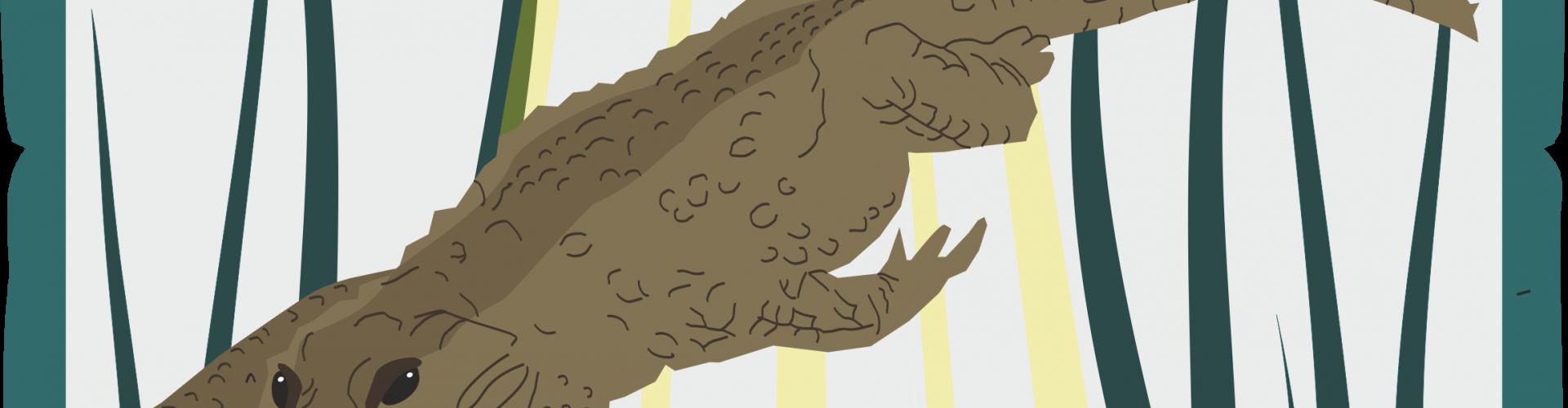 DIY | Krokodyl
