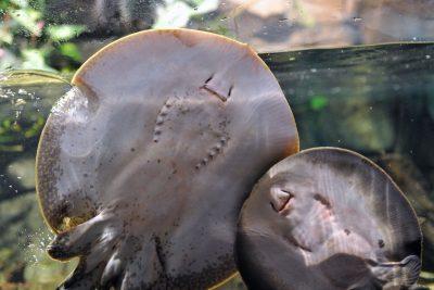 Walentynki w Akwarium Gdyńskim
