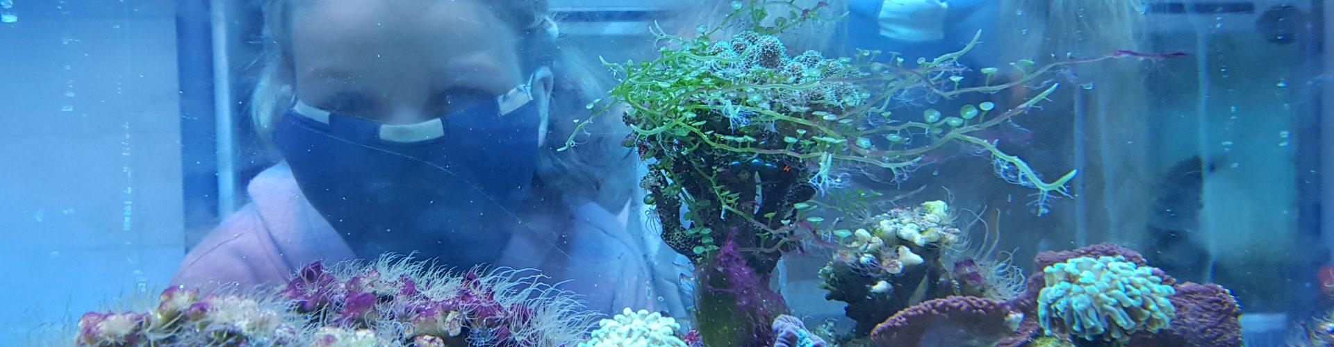 Koralowce wychodzą z morza   29 lipca