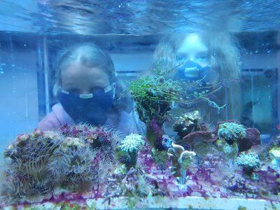 Koralowce wychodzą z morza | 29 lipca